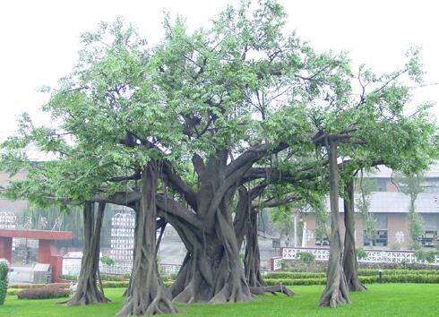 四川水泥假树