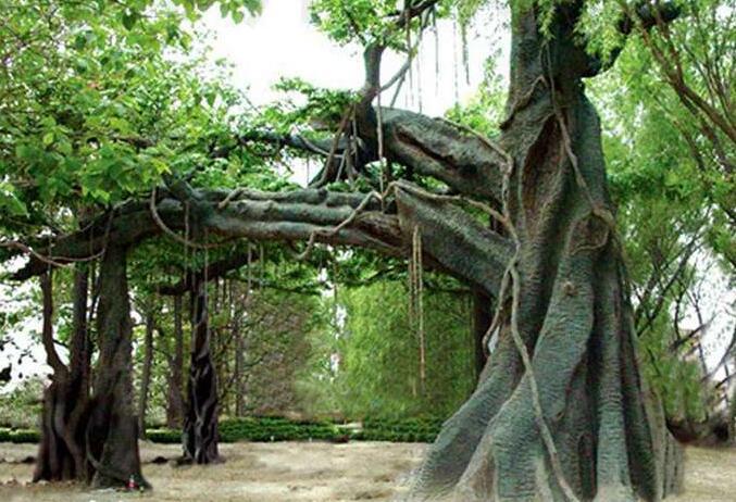 四川仿木假树制作