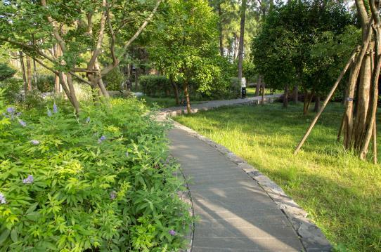 园林景观工程应根据当地土壤环境条件,选择种植的树种