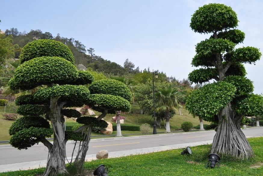 谨记湖北园林不同种类苗木绿化养护技术要点!