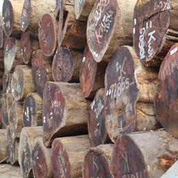 印尼菠萝格原木圆木