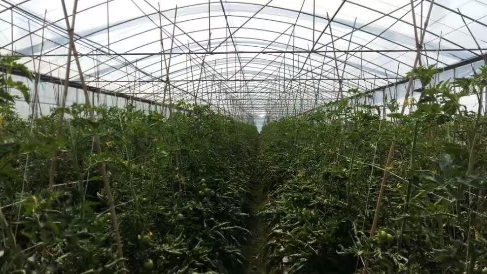 成都温室大棚新工程案例-金堂果园