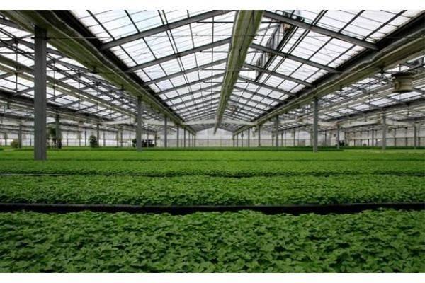 四川温室大棚中种植的蔬菜怎么浇水