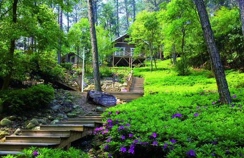 """""""十三五""""以来 森林旅游游客量年均增百分之十五"""