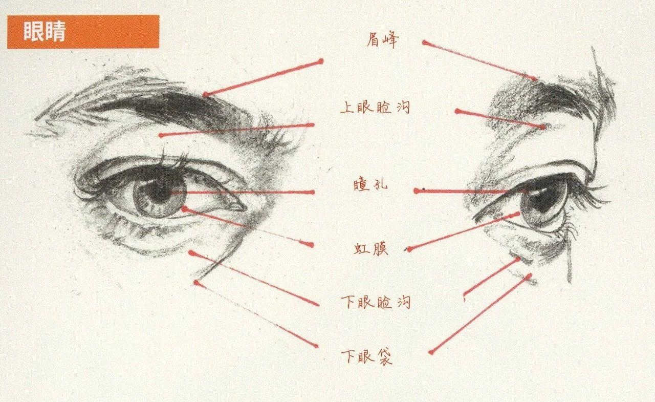 【培蕾美术】  速写眼耳鼻嘴的刻画要点!超强干货,建议收藏!