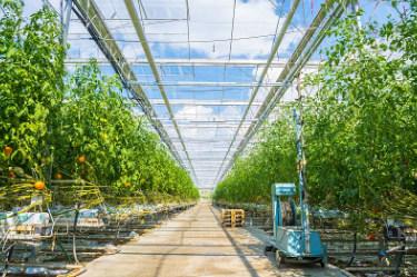 中国2020年农业农村五大关键点