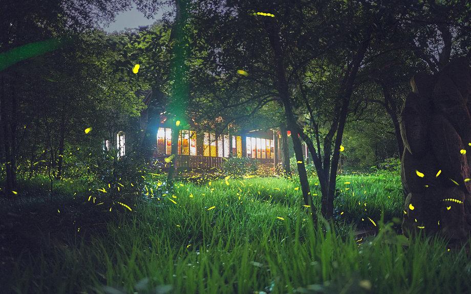 森林康养成为新兴市场热点