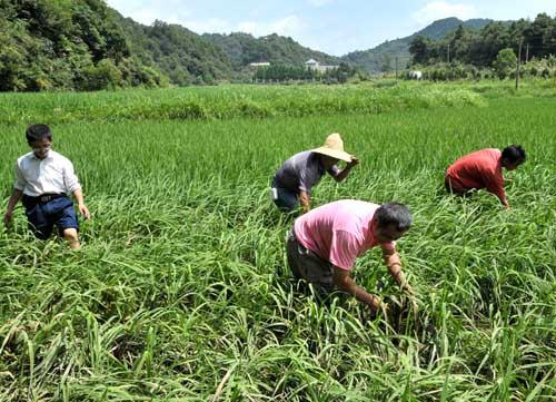 """这个方案你了解吗?农业生产""""三品一标""""提升行动实施方案"""