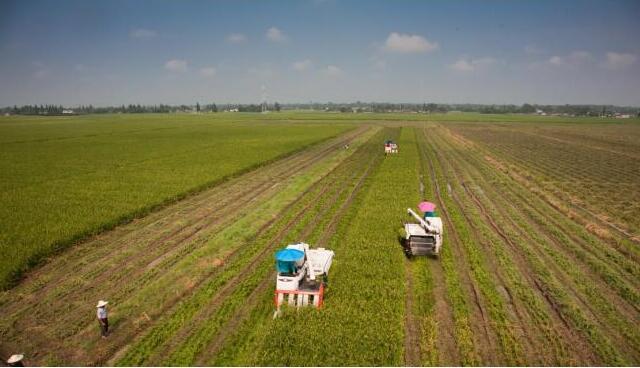 四川农业生产托管运营