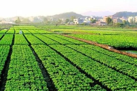 有机农业标准解析