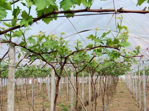四川农业生产托管运营客户评语