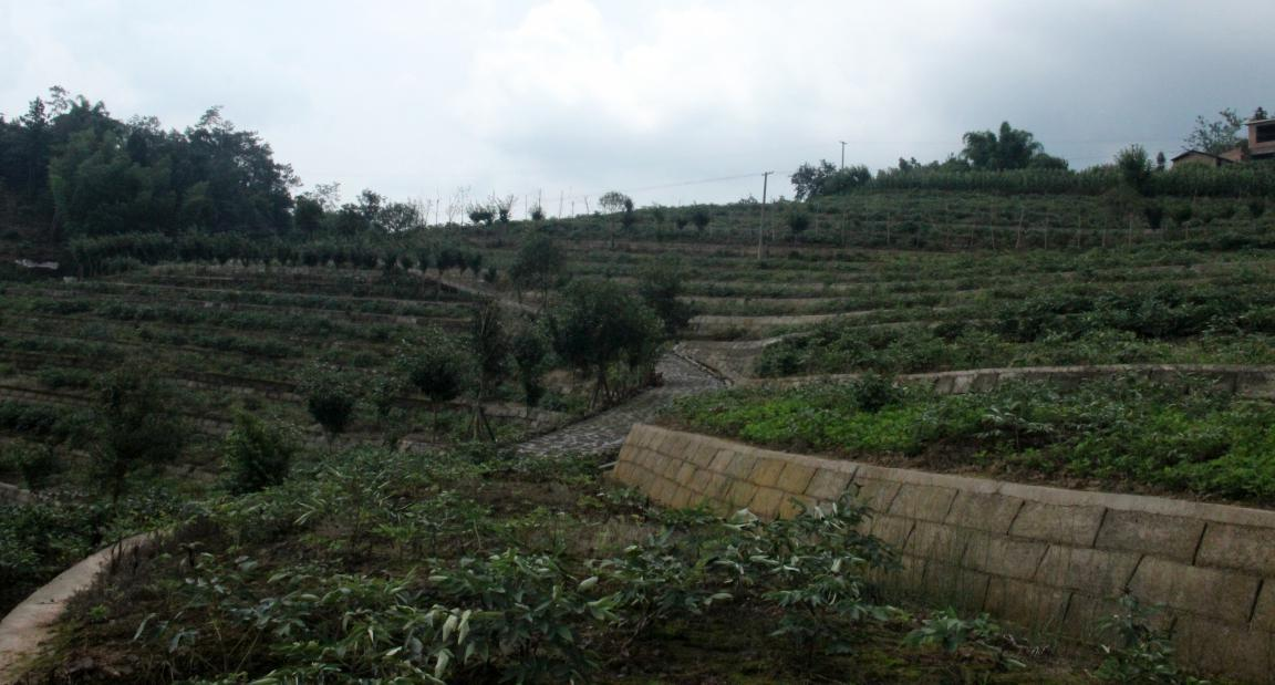 牡丹产业园
