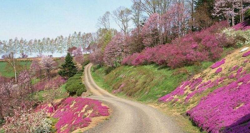 乡村道路景观