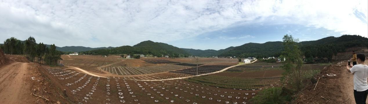 2019年中国柑橘行业现状浅析及对策建议
