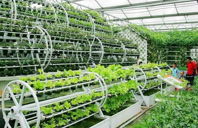 植物工厂与康养农业的融合