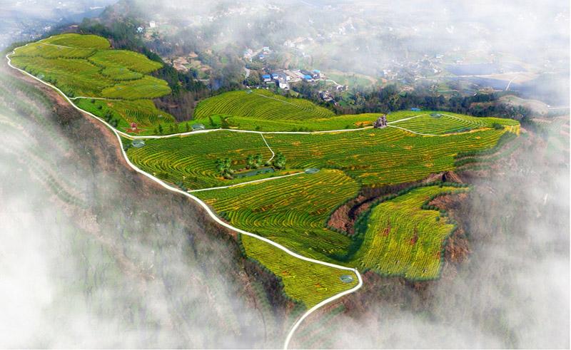 旺苍化龙现代农业示范园