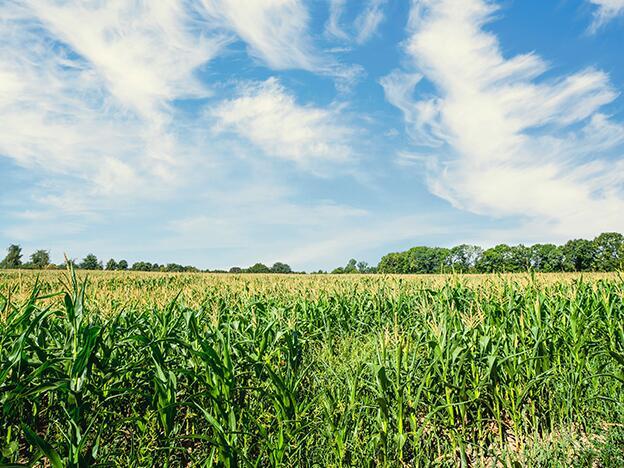 微生物肥料为何能修复农药对土壤的污染?
