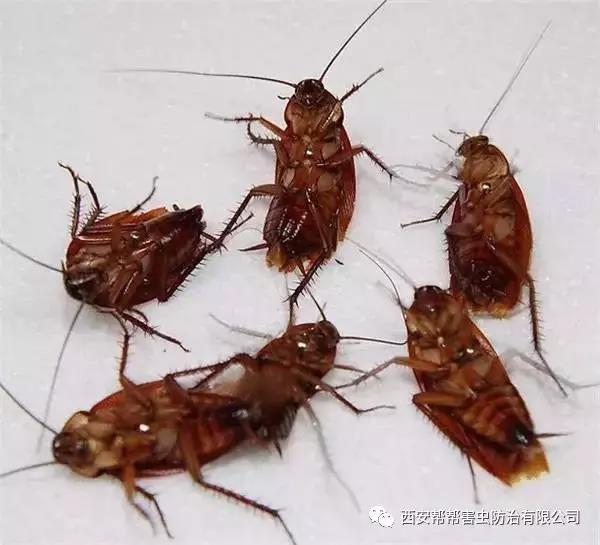 灭蟑螂小妙招,你知道几个!