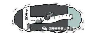酒店餐饮业-鼠类防治