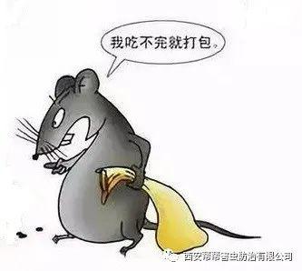 食品加工业-鼠类防治