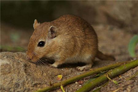 如何消灭老鼠,分享3个灭鼠好方法送给你