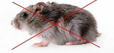西安灭老鼠别再用老鼠药了,2张纸轻松抓老鼠