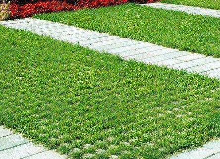 襄阳广场植草砖厂家