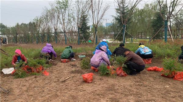 东嵘亿盛园林景观的生态种植有什么因素
