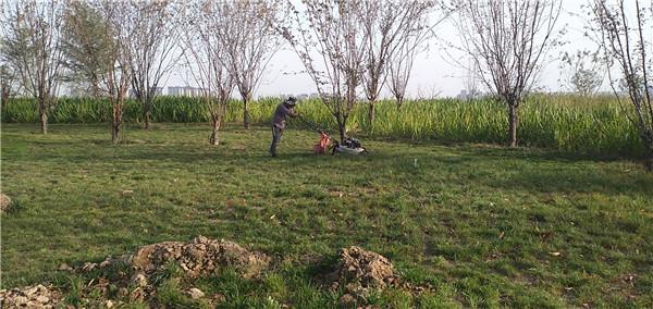 景观绿化养护