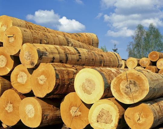 木材的好处远远不止你想到的那么多!