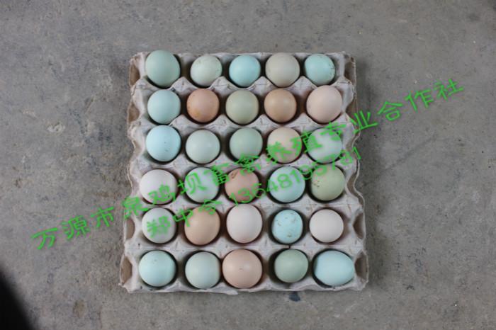 万源旧院黑鸡蛋