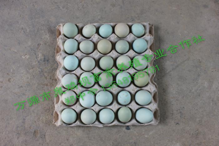 泉鸡坝旧院黑鸡蛋
