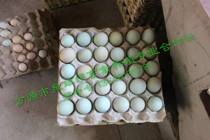 旧院黑鸡蛋
