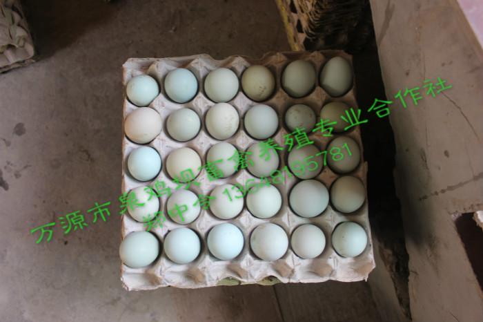 四川旧院黑鸡蛋