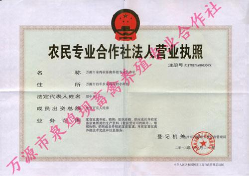 四川旧院黑鸡苗厂家营业执照