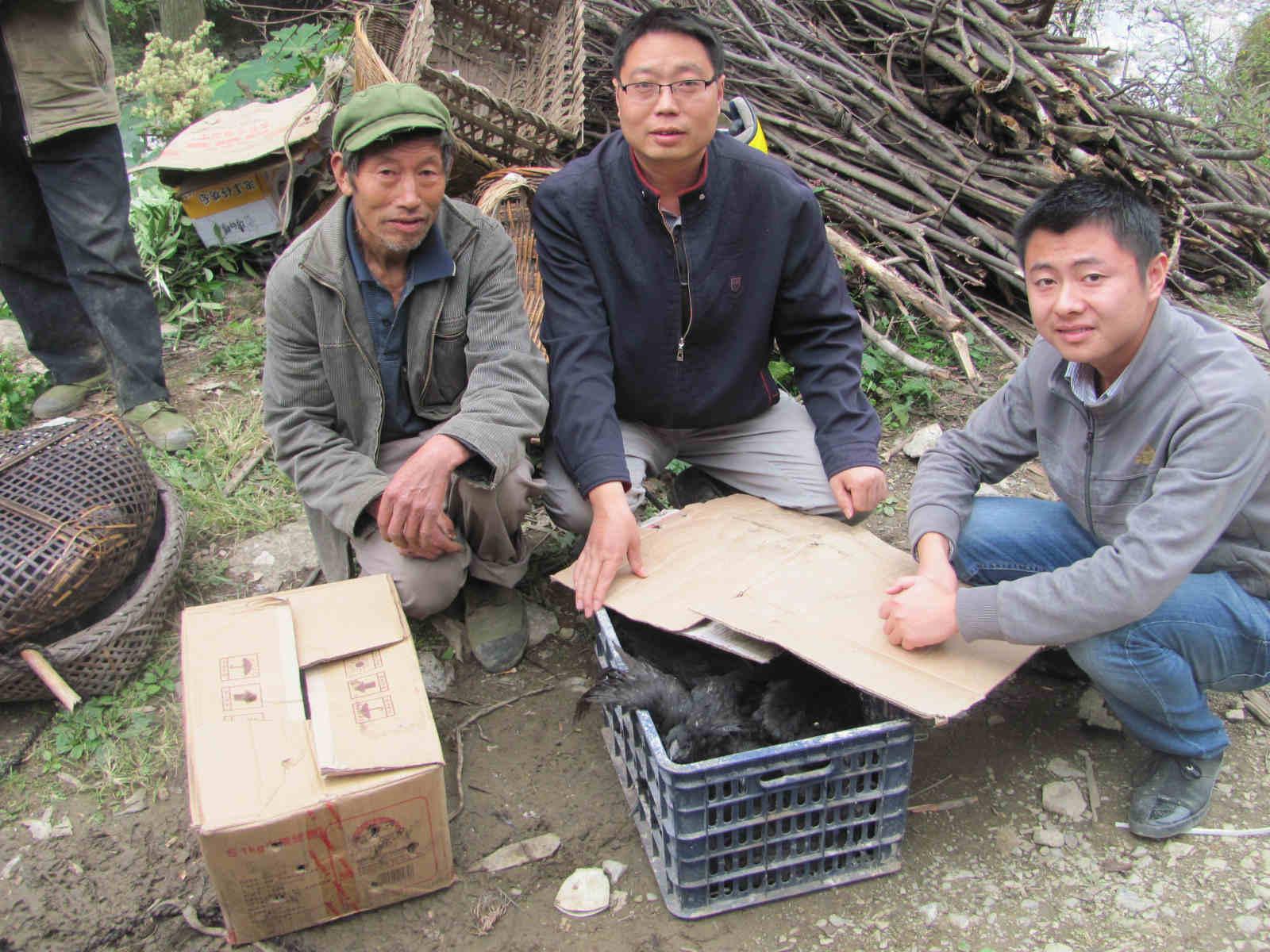 四川旧院黑鸡苗厂家案例——绵阳市安县李先生订购黑鸡苗