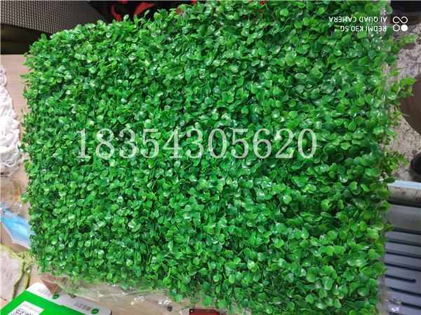 四川仿真植物墙