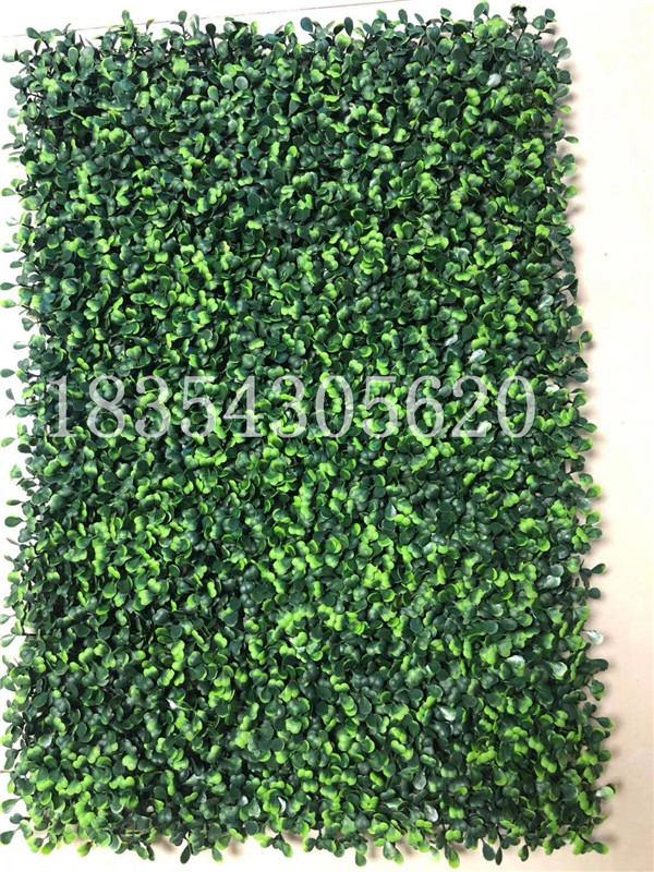 四川绿植墙草