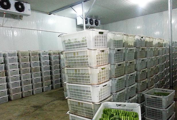 如何管理成都果蔬冷库可以更好的保鲜?