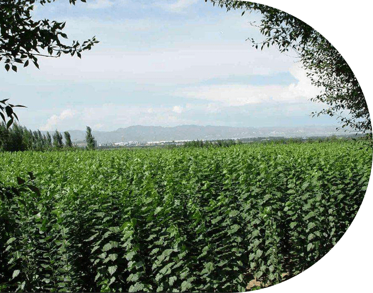 河南永森园林