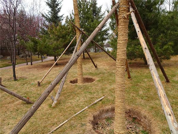 园林稻草绳子  绿化绕树干草绳