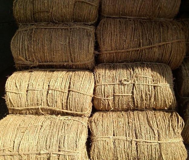 苗木种植后要需要搭遮荫棚,用草绳或麻片绕杆