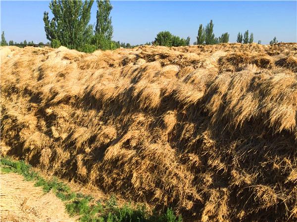 来来来,看看稻草用作养殖饲料的处理方法都有哪些吧!