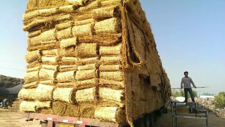 这些就是进行园林绿化工程的时候的草绳的施工标准