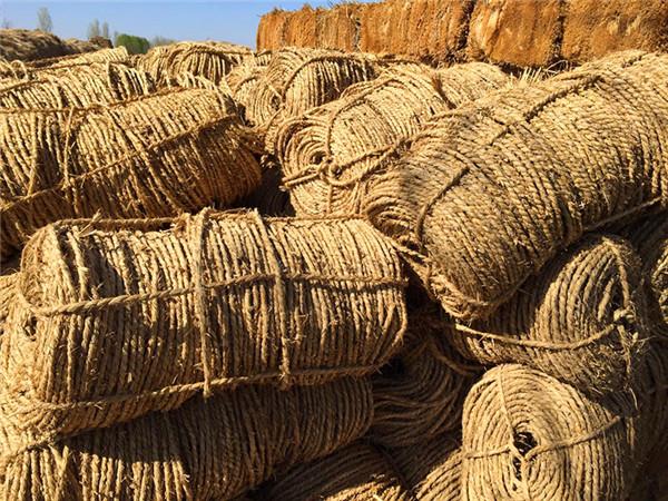 如何生产出高质量的绿化草绳呢?