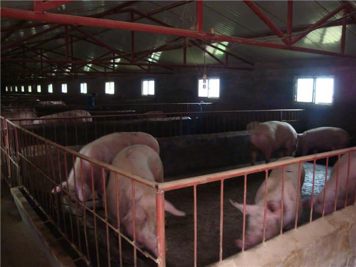 陕西畜牧养殖