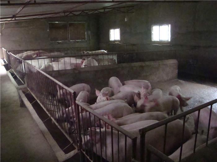 陕西畜牧养殖技术