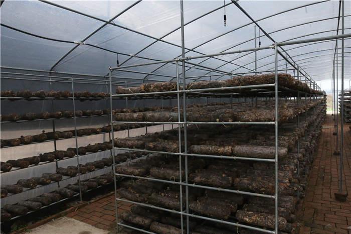 陕西生态农业种植