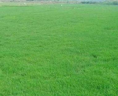 成都人造草坪在施工时需要注意的地方