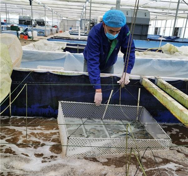 河南对虾养殖加盟